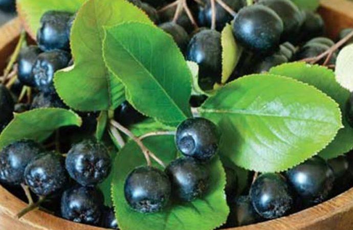 Cumpără preparate din aronia ecologice, pentru un plus de sănătate!