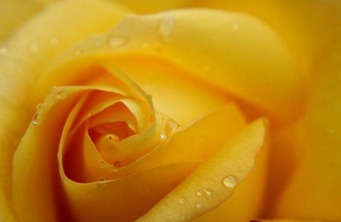 Ce flori dăruiești în funcție de eveniment?